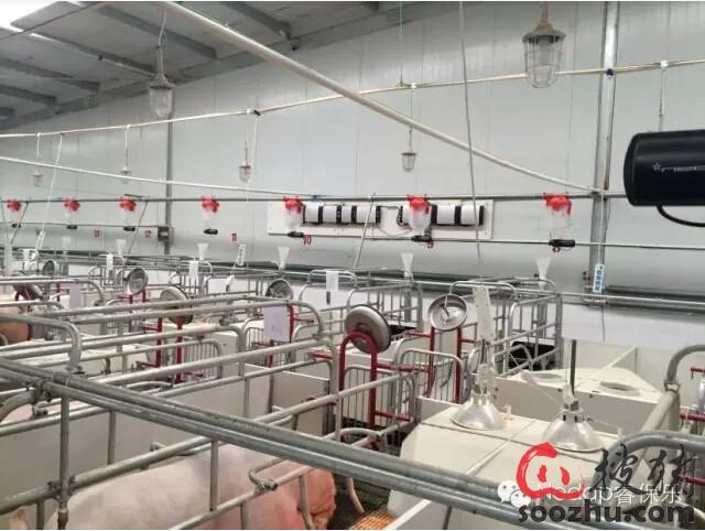 智能化母猪单栏饲喂管理系统的优势