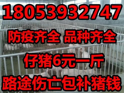 今天陕西小猪仔价格批发价格目前陕西小猪仔价格多钱一斤